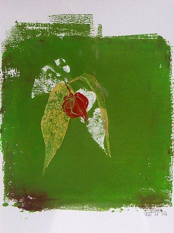 'Lampionplant', Mareike Henkel